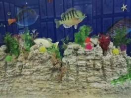 水族馆珊瑚道具英雄联盟竞彩软件亚博