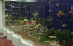 海洋馆珊瑚假山英雄联盟竞彩软件亚博